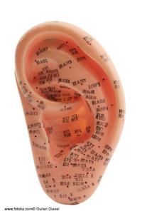 Ohr - Akupunktur Model - Traditionelle Chinesische Medizin